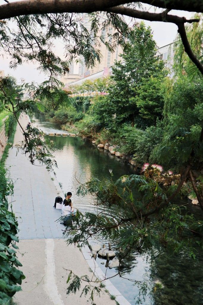 Bäume am Cheonggye Stream