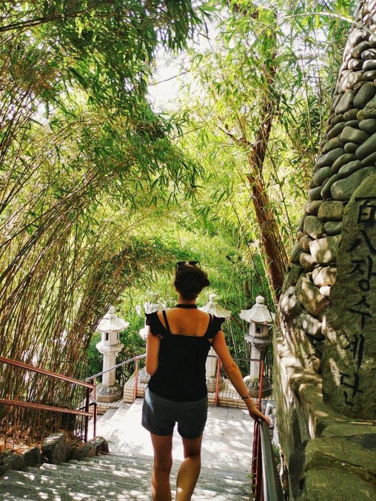 Bambus beim Tempel Haedong Yonggungsa