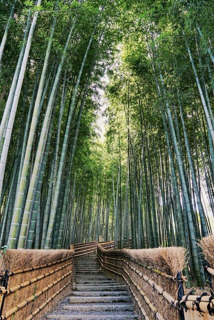 Bambuswald beim Nembutsu-ji Tempel