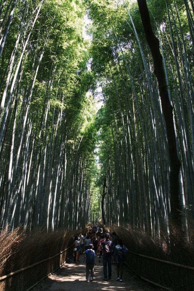 Bambuswald von Arashiyama.