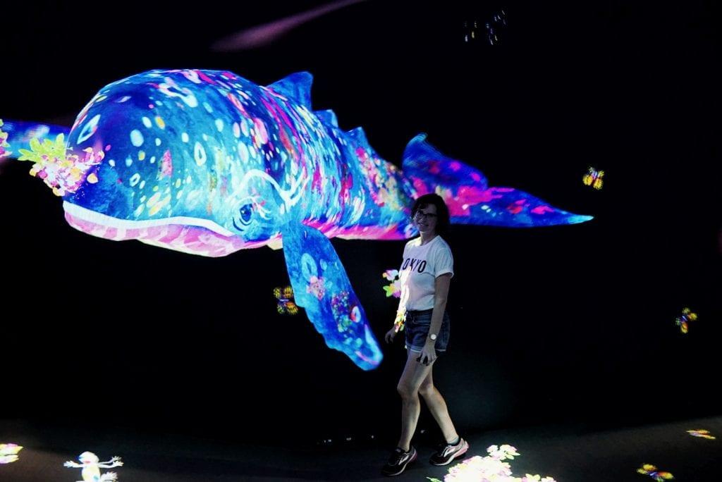 Wal aus Licht und Farbe