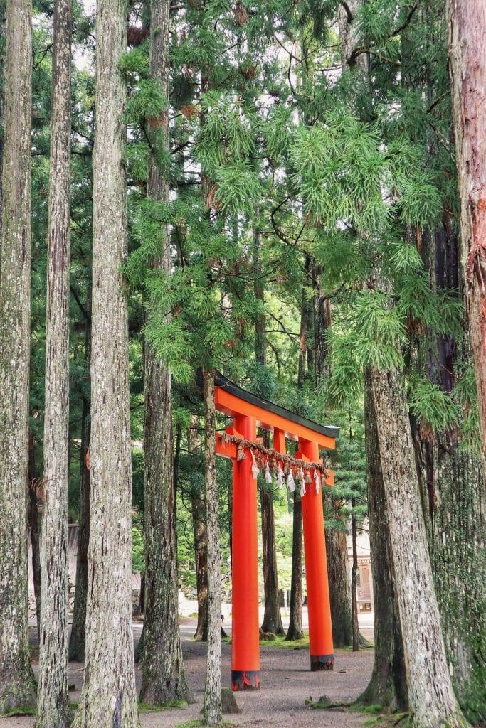 Rotes Tori im Wald von Koyasan