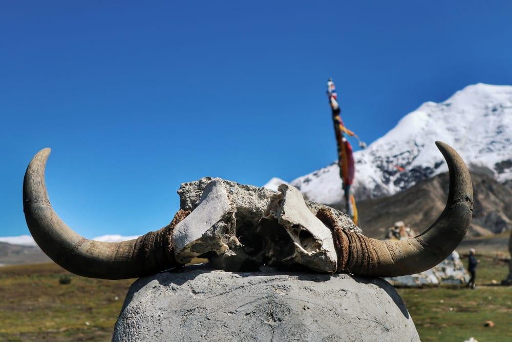 Yakschädel und Schneeberg in Tibet