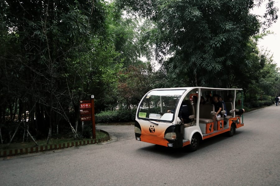 Panda Shuttle im Chengdu Research Base of Giant Panda Breeding