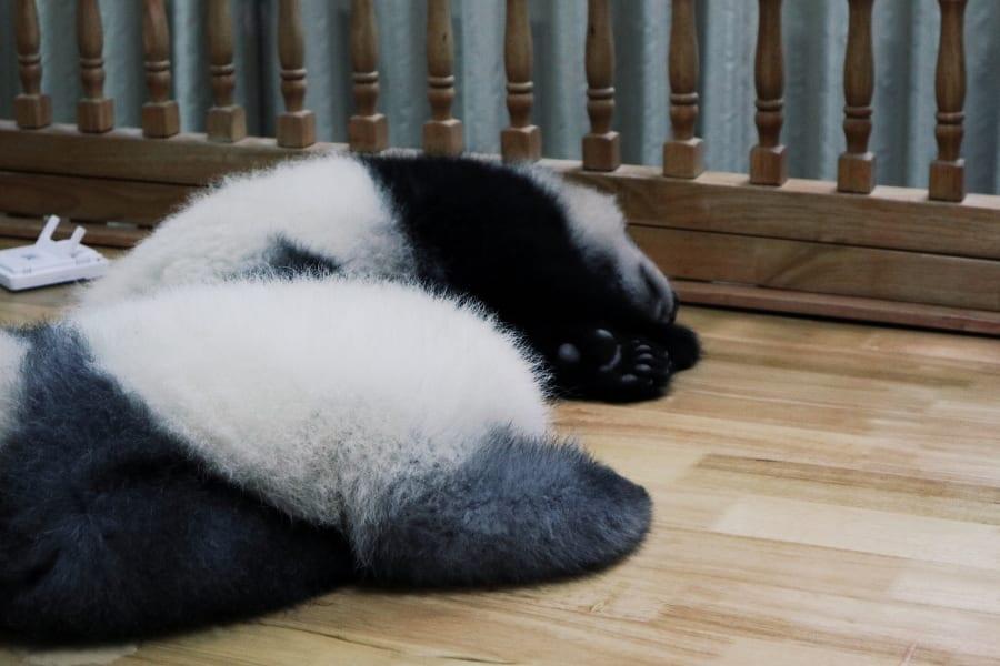 Pfote Baby Panda