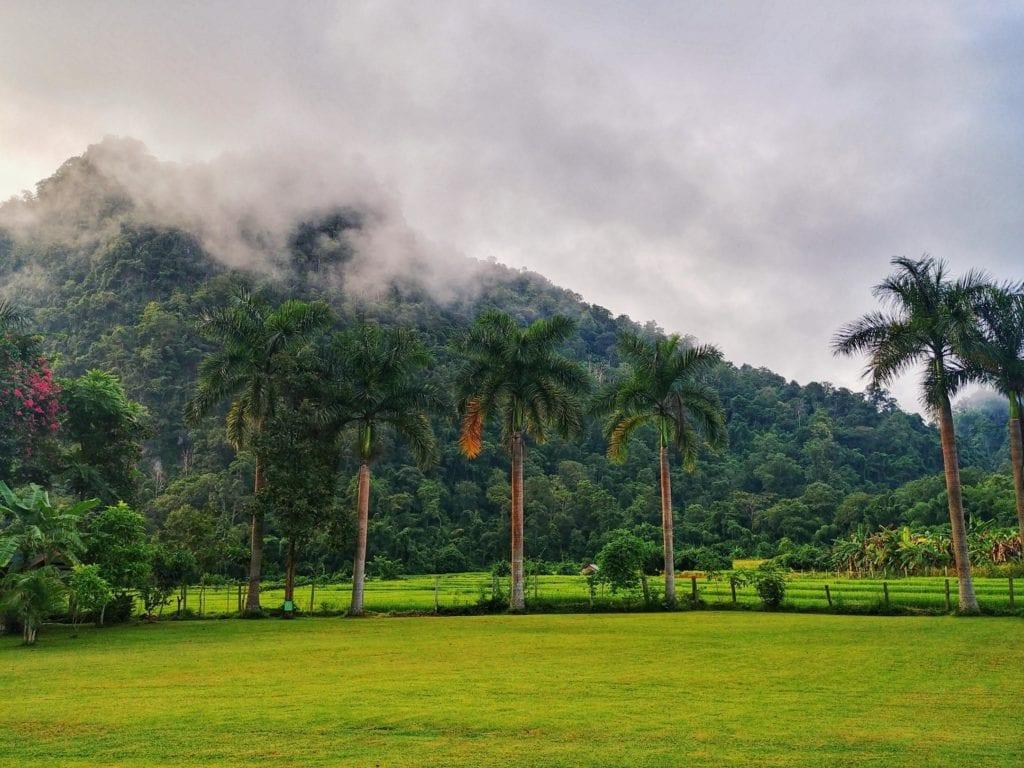 Palmen, Rasen und Berg der Wat Pa Tam Wua Forest Monastery im Nebel