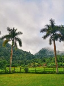 Palmen und Reisfelder der Wat Pa Tam Wua Forest Monastery