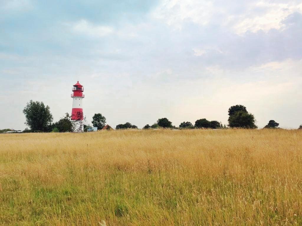 Leuchtturm Falshöft im Kornfeld