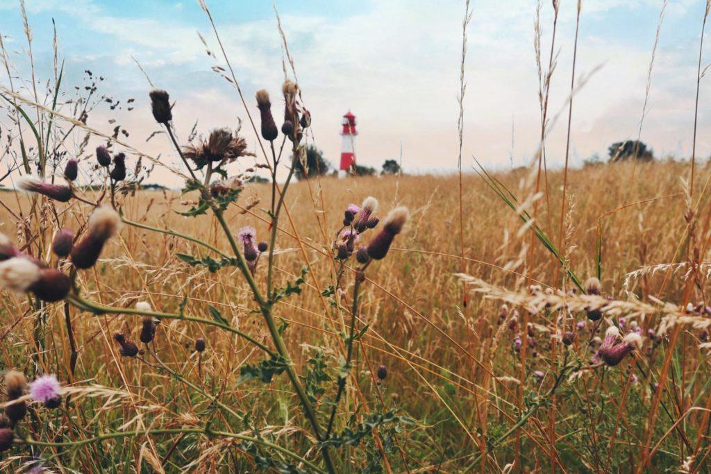 Leuchtturm Falshöft mit Blumen im Vordergrund