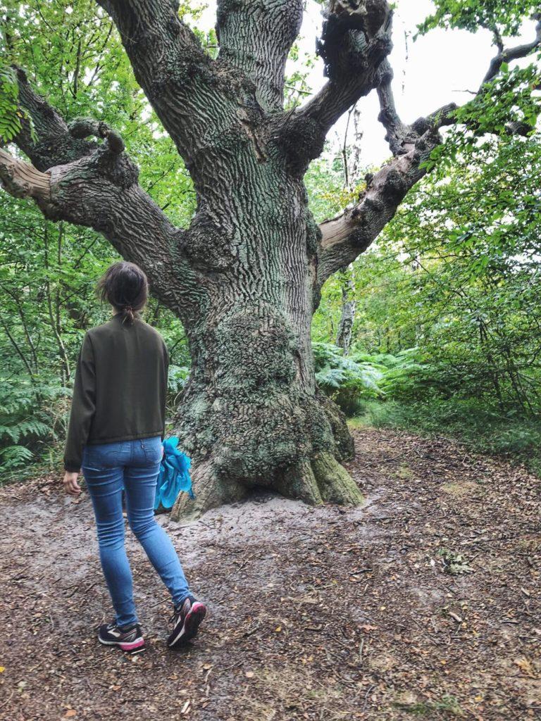 Travellerin Lisa auf Insel Vilm Baum
