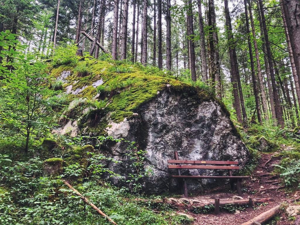 Zauberwald Lehrpfad mit Brücke