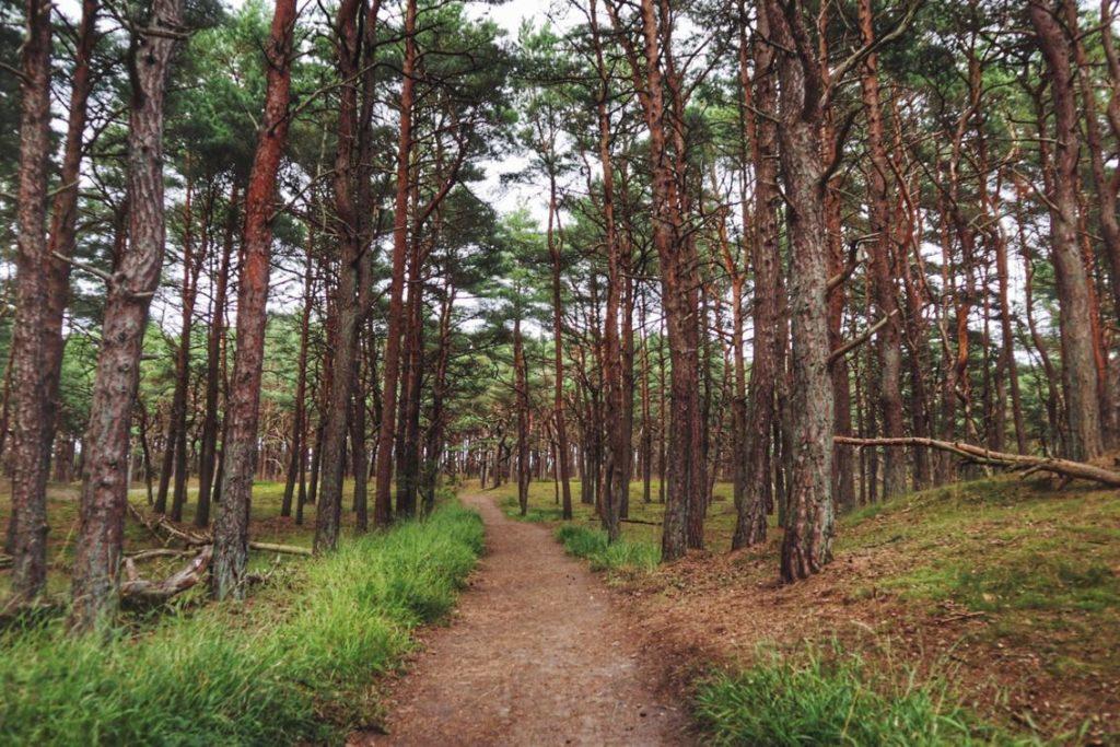 Nadelwald Richtung Schaabe Ostsee auf Rügen