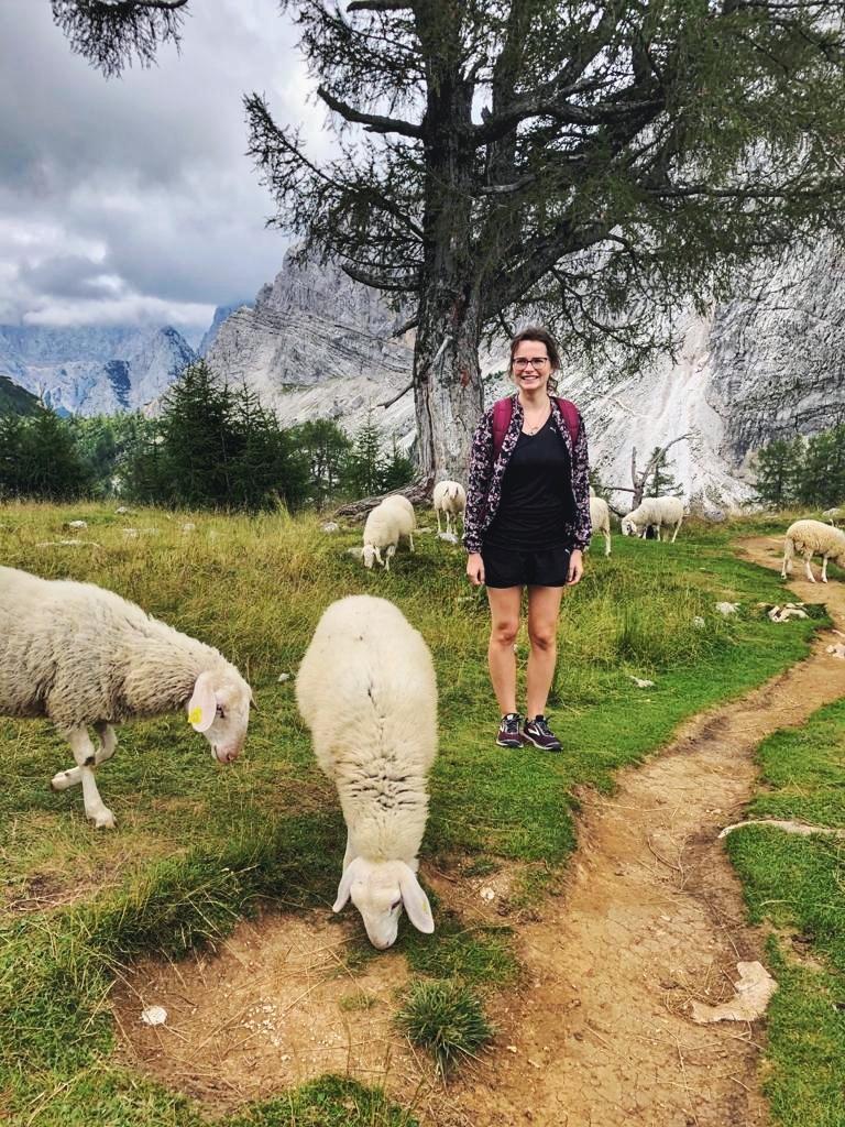 Schafe auf der Slemenova Spica