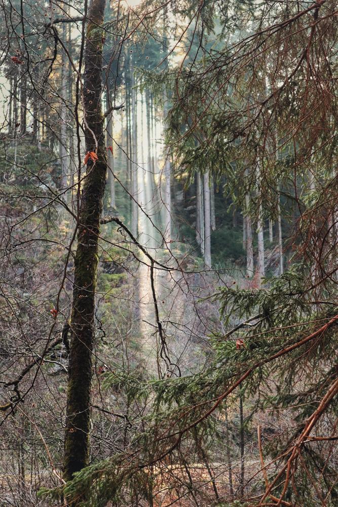 Monschau Wanderwege_Lichtung im Wald