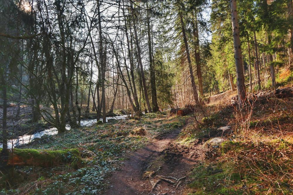 Monschau Wanderwege_Rur und Wald auf dem Jahrhundertweg Monschau