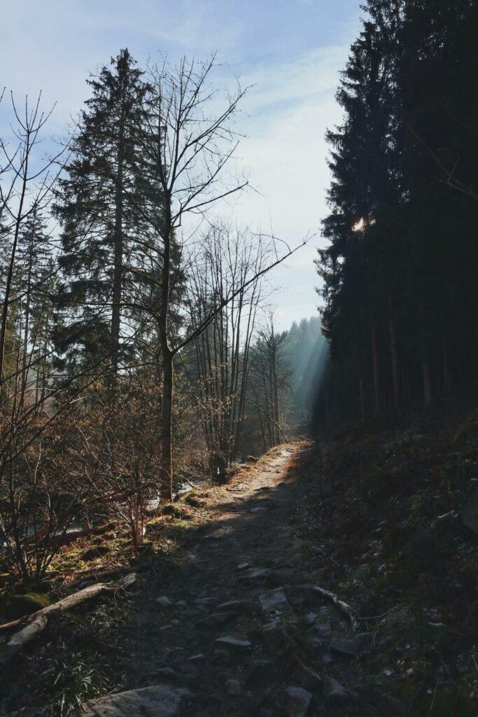 Monschau Wanderwege_Wald mit Lichtblick_Jahrhundertweg Monschau