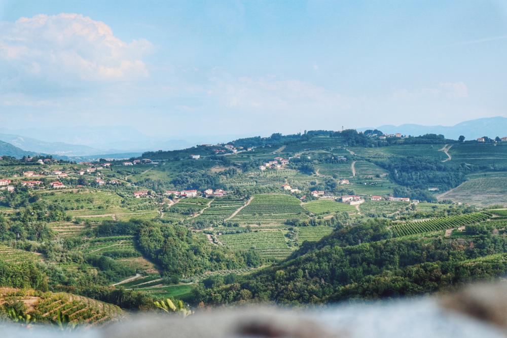 Slowenien Geheimtipp_Weinregion Brda_Weinfelder