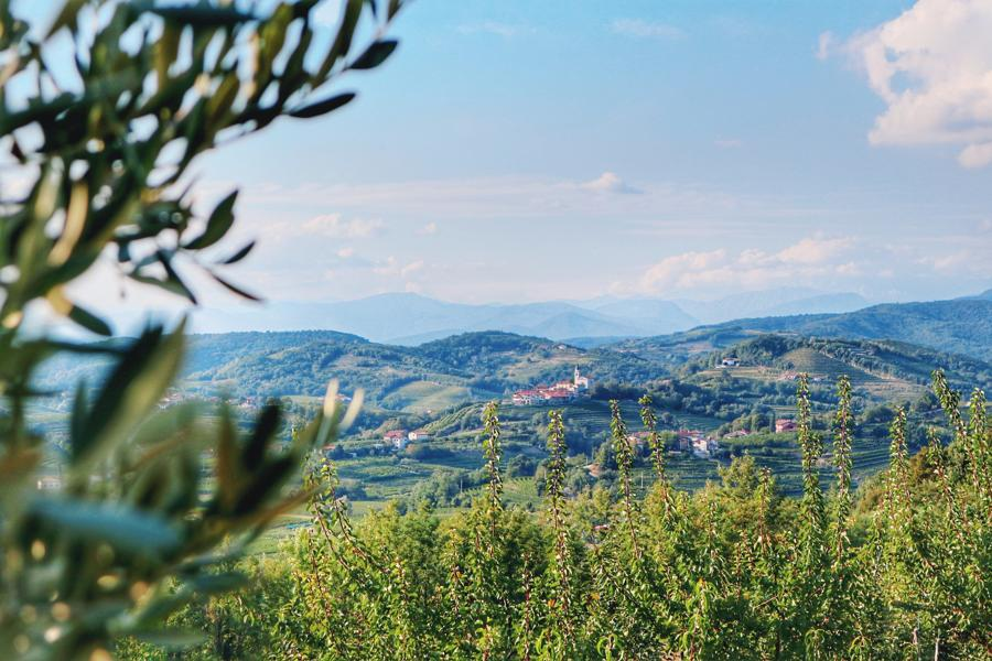 Slowenien Sehenswürdigkeiten_Weinregion Brda